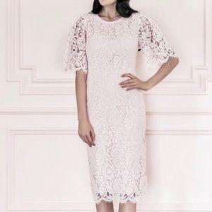 Rachel Parcell Flutter Lace Midi Sheath Dress